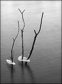 """Ice and Branches, Gladhouse Reservoir"""